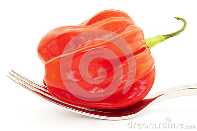 One chili pepper or habanero on a fork
