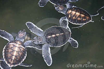 One-day turtles