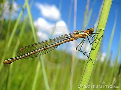 One dragonfly on the green grass