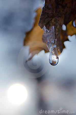 Free One Drop On The Lief Stock Image - 22050211