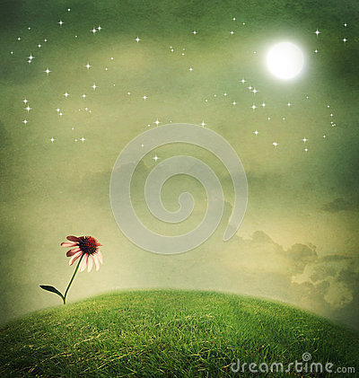 Free One Echinacea Flower Under The Moon Royalty Free Stock Image - 37944576