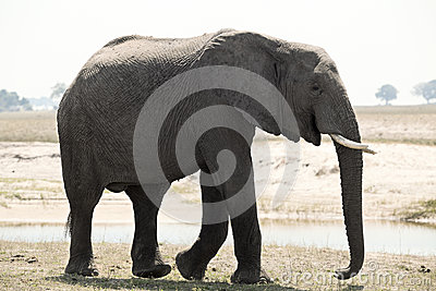 One elephant namibia