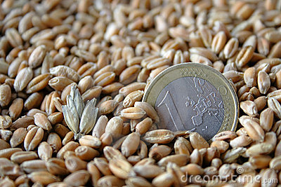 One euro coin among wheat grains