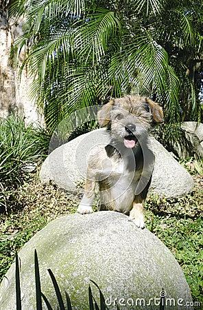 One eyed dog posing