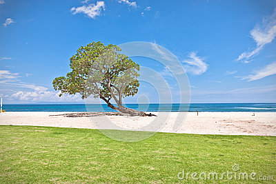One green tree on the beach