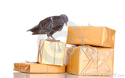 One grey messenger-pigeon and parcels