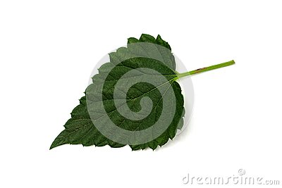 One hop leaf