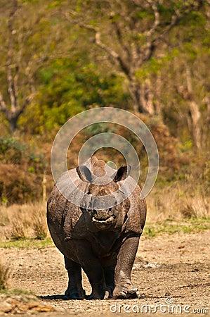 Rhino vertical image