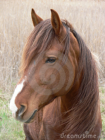 One Horse