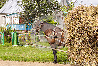 One horse transportation hay on wooden cart - Ukra