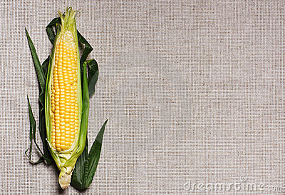 One indian corn ear on gray linen canvas