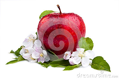 One Juicy Red Apple and flowers