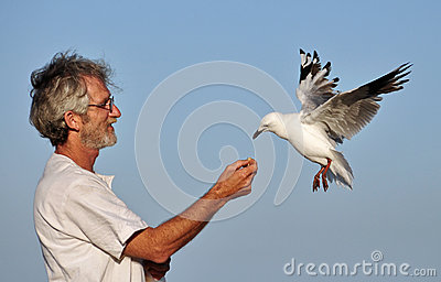 One man and one seagull eating out of his hand.