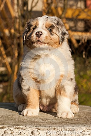 One nice puppy