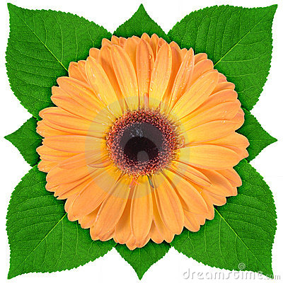 One orange flower with green leaf