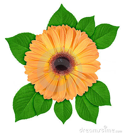 Free One Orange Flower With Green Leaf Stock Photo - 15048500