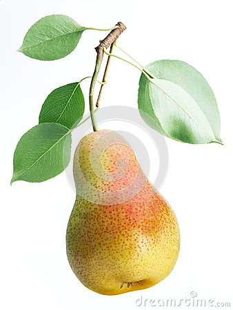 Free One Pear Fruit With Pear Leaves On White Background. Royalty Free Stock Photos - 114283168