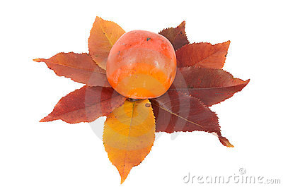 One persimmon and autumn leaves.