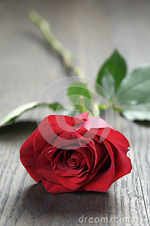 Free One Red Rose On Oak Wood Table Stock Photography - 49295242