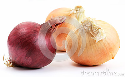 One red and two yellow onions (allium)