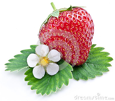 One rich strawberry fruit with flower.