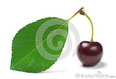 One ripe cherry