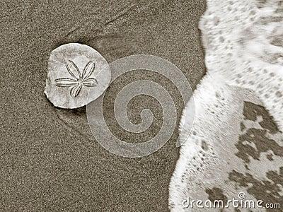 One (sand) Dollar