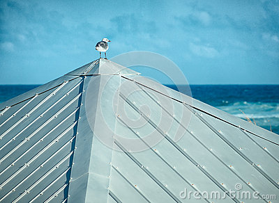 One Seagull on a Tin Roof Looking Out to Sea