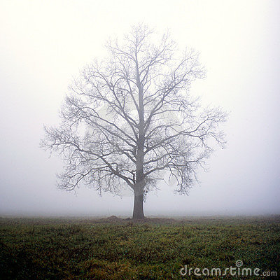 One tree in fog