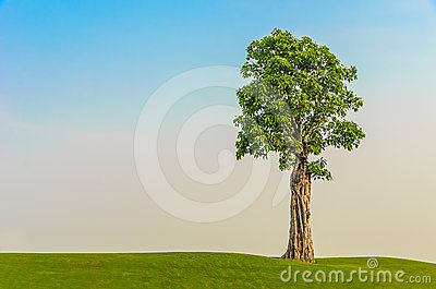One tree on grass field in morning sky