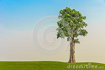 One tree on grass field in morning sky