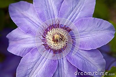One violet flower