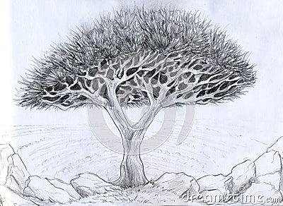 Ongebruikelijke boom - potloodtekening