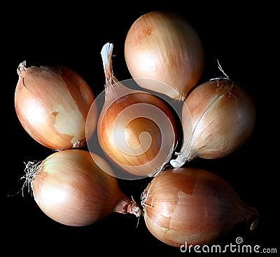 Free Onion Stock Photography - 3534952