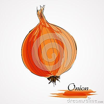 Free Onion Royalty Free Stock Image - 49559936