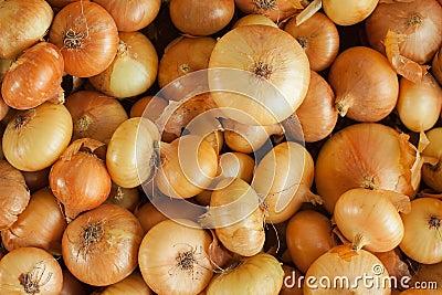 Onion background