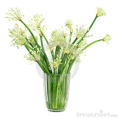 Onion leaves with flowers