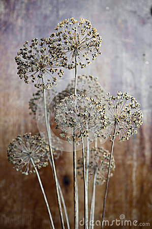 Onion seeds of a flower