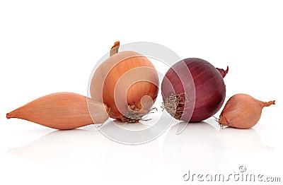 Onion Types