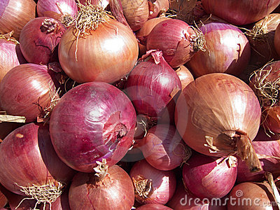 Onions Background