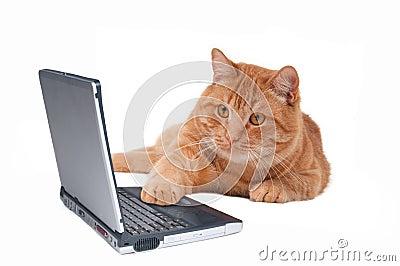 Online Cat