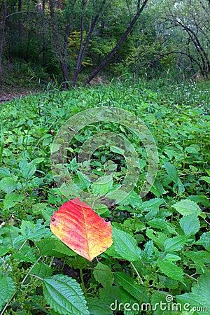 Onset of Fall - Illinois