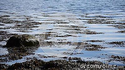 Ontruim en kalmeer de blauwe achtergrond van de fjordoppervlakte met zeewier stock footage