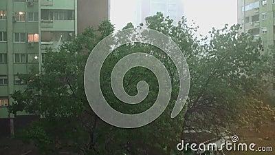 Onweer en Heavy Rain 4 - Zware regen en zeer sterk onweer De bomen bewegen zich net sterk links en stock videobeelden