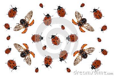 Onzelieveheersbeestjes