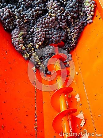 Oogst 02 van de druif