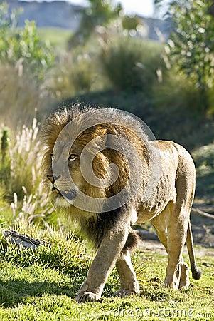 Op Prowl