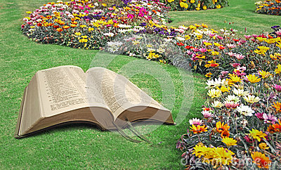 Open bible spiritual tranquility paradise park Stock Photo