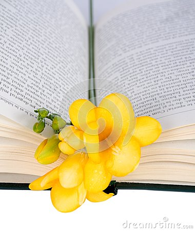Open the book and freesia