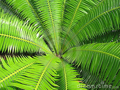Open Green Fern Leaf Background